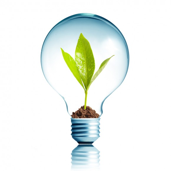 Light Bulb 11W
