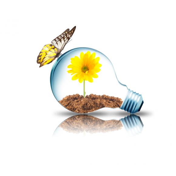 Light Bulb 12W